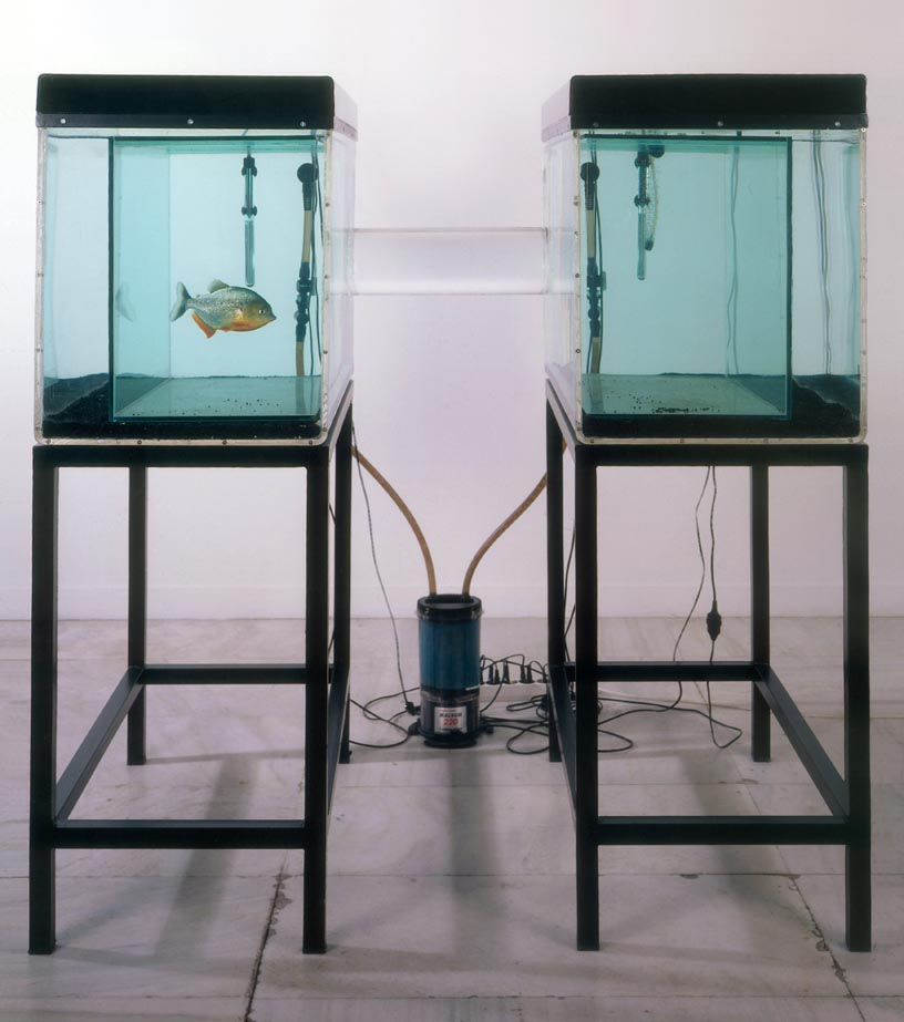 Sophia Kosmaoglou Trial Separation, 1995. Glass, acrylic, metal, gravel, power filter, heaters, fluorescent lamps, piranha, 167 x 102 x 147 cm. School of Fine Art graduate show 1995. National Gallery, Athens.
