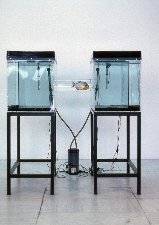 Sophia Kosmaoglou Trial Separation, 1995. Glass, acrylic, metal, gravel, power filter, heaters, fluorescent lamps, piranha, 167 x 102 x 147 cm. Athens School of Art graduate show 1995. National Gallery, Athens