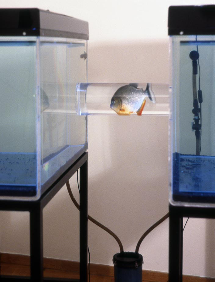 Sophia Kosmaoglou Trial Separation, 1995. Glass, acrylic, metal, gravel, power filter, heaters, fluorescent lamps, piranha, 167 x 102 x 147 cm. Icebox Athens, 1996