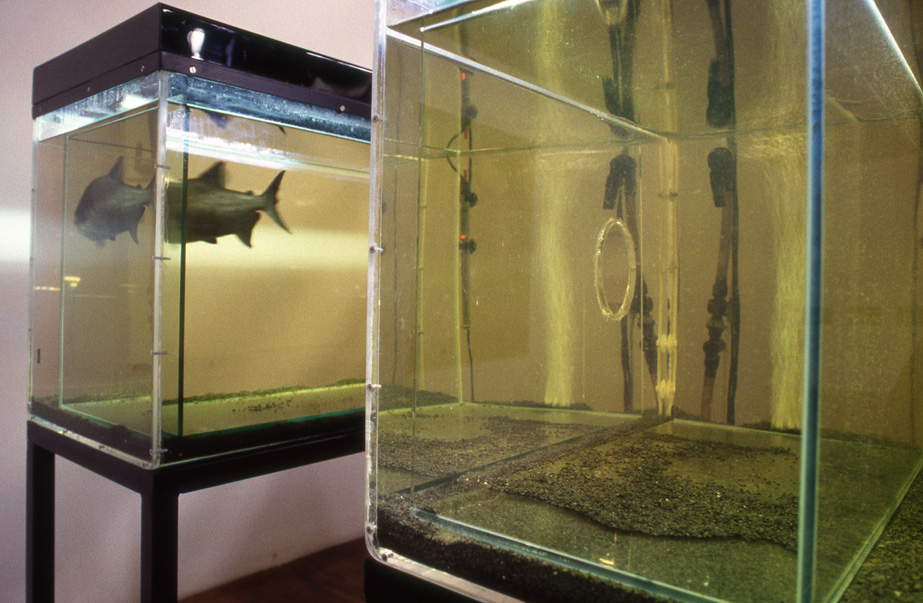 Sophia Kosmaoglou Trial Separation, 1995. Glass, acrylic, metal, gravel, power filter, heaters, fluorescent lamps, peat, piranha, 167 x 102 x 147 cm. 5th İstanbul Biennial, 1997