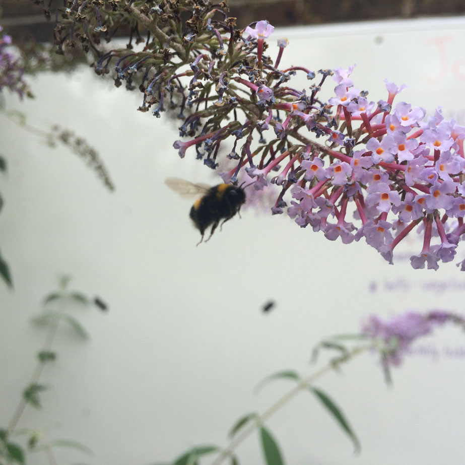 Bees in the Old Tidemill Wildlife Garden. Photo Sophia Kosmaoglou.